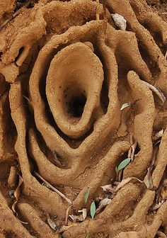 A beautiful sculpture ~ Harvester Ant Nest
