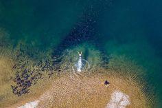 Bộ ảnh tuyệt vời của National Geographic: Khi thế giới hoang dã hóa mình thành kiệt tác - Ảnh 2.