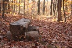 A quiet spot for rest and relaxation along the trail.