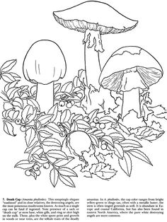 Mushrooms of the World with Pictures to Color Dover Publications