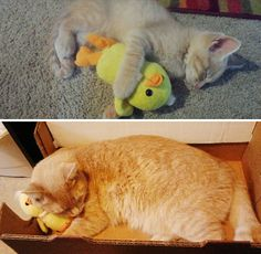 Before-and-after photos of pets growing up prove you're never too old to outgrow your favorite toys.
