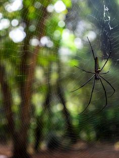ITAP of a spider in a zoo in India http://ift.tt/2h4SAJH