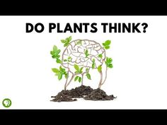 Do Plants Think? From It's Okay To Be Smart - Path ...