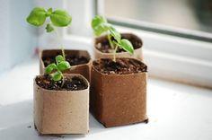 Vasinho reaproveitando rolos de papel higiênico - Atitudes Sustentáveis