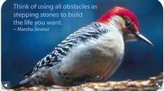 Woodpecker wisdom - what's your sign.com