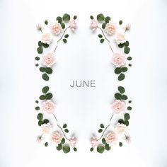 "9,665 aprecieri, 139 comentarii - Julia Smith (@humphreyandgrace) pe Instagram: ""hello June | the month of roses, here's to a good one x #julias_calendar"""