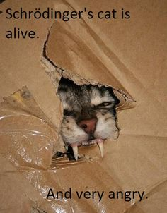 schrodinger's cat is alive... (makes me think of big bang theory)