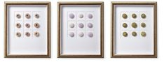 Asst. of 3 Sea Urchin Shadow Boxes Now: $260.00   Was: $325.00