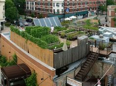 """Rooftop garden: """"Uncommon Ground, a certified green restaurant in Chicago, hosts an organic farm on its rooftop."""""""