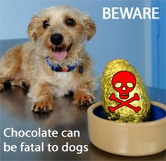 Did you know that human chocolate is poisonous to dogs? Chocolate can cause illness or even death in our four-legged friends. Theobromine, or chocolate, poisoning is actually one of the most commonly encountered poisonings in pet dogs http://www.dfordog.co.uk/blog/chocolate-poisonous-to-dogs.html