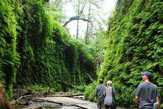 Fern Canyon in Prairie Creek Redwoods SP, Trinidad/McKinleyville/Orick, Humboldt County, California