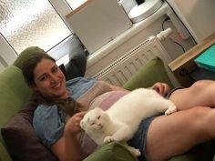 Roxxi, eine von drei Katzen am IFGE in Wien erwärmt das Herz und die Seele der Referentinnen und bringt sie zum Strahlen <3 Counseling Psychology, Beams, Training, Feel Better, Weird