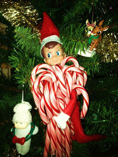 Too funny! Who knew the Elf on the Shelf was a candy cane hoarder?