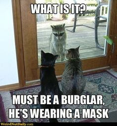 For more funny animals and hilarious animal pictures visit /lol-funny-cat-pic/Animal humor .For more funny animals and hilarious animal pictures visit /lol-funny-cat-pic/ Funny Animal Quotes, Animal Jokes, Cute Funny Animals, Cute Cats, Funniest Animals, Cat Fun, Funny Quotes, Cat Quotes, Funniest Quotes