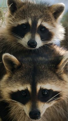 12 photos of animals that remind us to appreciate national wildlife refuges fauna, animals and Woodland Creatures, Cute Creatures, Woodland Animals, Beautiful Creatures, Animals Beautiful, Animals And Pets, Baby Animals, Funny Animals, Cute Animals