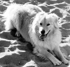 Understanding Congestive Heart Failure | Whole Dog Journal