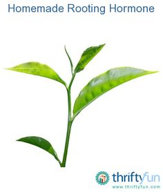 This is a guide about how to make your own rooting hormone. Plants often root more successfully when you use a rooting hormone, but you don't have to buy a commercial product, willow or honey work just as well. Amazing Gardens, Organic Gardening, Plant Roots, Garden Help, Plant Leaves, Propagating Plants, Plant Clips, Gardening Tips, Rooting Hormone
