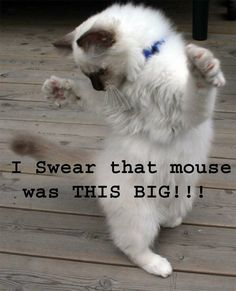 Cats version of a fish tale!
