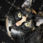Guide to Mixed Breed Alley Cats by Color