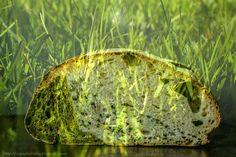Zapach chleba