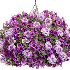 Sparkle and Glow | Proven Winners Container Flowers, Flower Planters, Container Plants, Container Gardening, Flower Baskets, Types Of Flowers, Large Flowers, Purple Flowers, White Plants