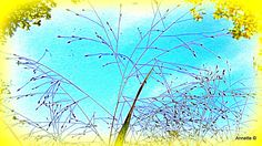 Grasje voor het raam Annette ©