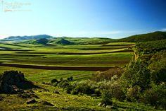 Dobrogea plains