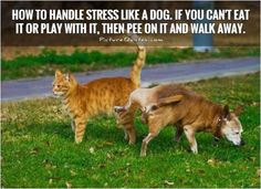 How to handle stress like a dog. If you can't eat it or play with it, then pee on it and walk away. Picture Quotes.