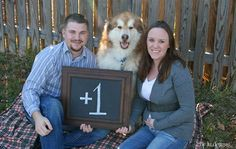 Baby announcement photo shoot. 3+3=6 (us and the dogs)