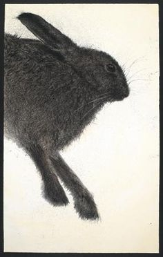 Sarah Gillespie ~ Hare (charcoal and ink on paper)