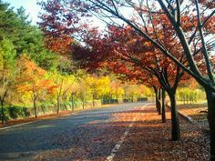 Autumn/Fall In South Korea (Ulsan Grand Park)