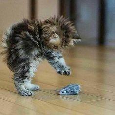 Follow @cutewildanimals for more awesome cute animal photos and videos Via @cutewildanimals by nationaldestinations https://www.instagram.com/p/BAQcpRzOg9L/ via https://scontent.cdninstagram.com/hphotos-xpa1/t51.2885-15/e35/927789_1656532017933329_1687451