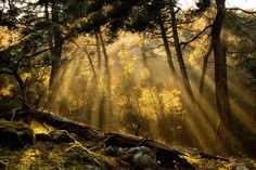 sun beams in the woods Greece Pictures, Video Photography, Digital Camera, Cool Pictures, National Parks, Amazing, Outdoor Decor, Nature, Painting