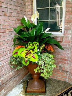 Japanese Garden Design Ivy, coleus, croton, and peace lily make a great combination for shade! Container Flowers, Container Plants, Container Gardening, Gardening Tools, Gardening Gloves, Gardening Supplies, Outdoor Flowers, Outdoor Plants, Beautiful Gardens