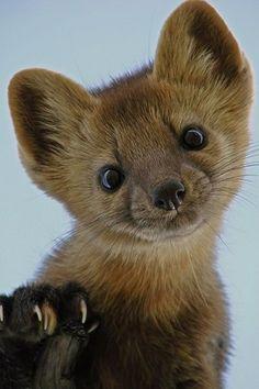 Baby Fox | Cutest Paw