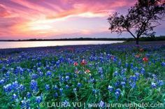 Field of Dreams  - Ennis, Texas