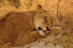 Animal Pictures - 55 Pics