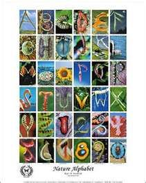 Alphabet and Letters in nature  make displays and books for the classroom
