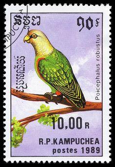 Camboya 1989-El Lorito Robusto es una especie de ave de la familia de los loros,endémica de África.