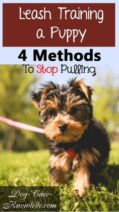 Try these simple tips on leash training a puppy or dog to stop pulling and walk calmly on a leash.