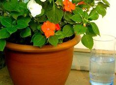 A venit primăvara! Cum tăiem trandafirii? | Paradis Verde Paradis, Planter Pots, Gardening, Interiors, Horsehair, Lawn And Garden, Horticulture