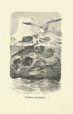 Antique Fish Prints