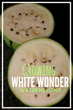 Featured heirloom of the week: White Wonder Watermelon! Watermelon History, Watermelon Plant, Old Tools, Exotic Fruit, Life Skills, Cucumber, Seeds, Gardening, Health