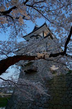 金沢城と桜の光景