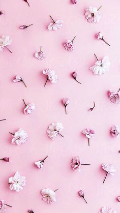 pastel pink wallpaper cherry blossom background by black united pastel pink wallpaper pastel pink wallpaper designs Wallpaper Tumblr Lockscreen, Phone Wallpaper Images, Wallpaper Backgrounds, Pink Background Wallpapers, Pinky Wallpaper, Iphone Background Pink, Cute Pink Background, Kpop Backgrounds, Wallpaper Designs