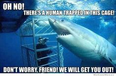 In recent years, some of my favorite ocean predators have started to show up in memes. As part of our tradition of using internet humor to educate our readers, I've selected the funniest shar…