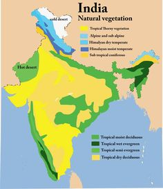 Natural Vegetation of India: Notes on the Classification of Natural Vegetation of India World Geography Map, Geography Lessons, Physical Geography, India World Map, India Map, General Knowledge Book, Gernal Knowledge, Ias Study Material, Cold Deserts