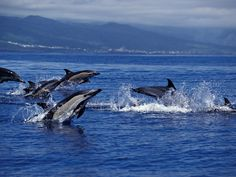 Azores, Portugal is one of 9 Unexpected Places to Go While the Euro Is Low according to Condé Nast Traveler 17.03.2015 | The Azores are among the world's prime places to watch twenty different kinds of whales and dolphins. Unlike many other whale watching spots, Azores boasts a diversity of both migrating and permanent species...