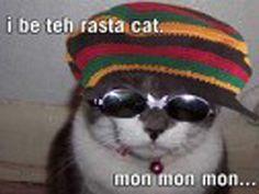 RASTA CAT HHHhh #reggaefun
