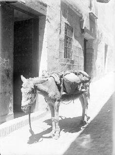 Toledo. El burro del reparto del agua en una calle estrecha. Wunderlich, Otto (1886-1975). Archivo: WUNDERLICH. Cortesía: CC BY-NC-ND Instituto del Patrimonio Cultural de España, Ministerio de Educación, Cultura y Deporte de España.